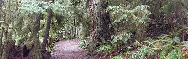 header-forest